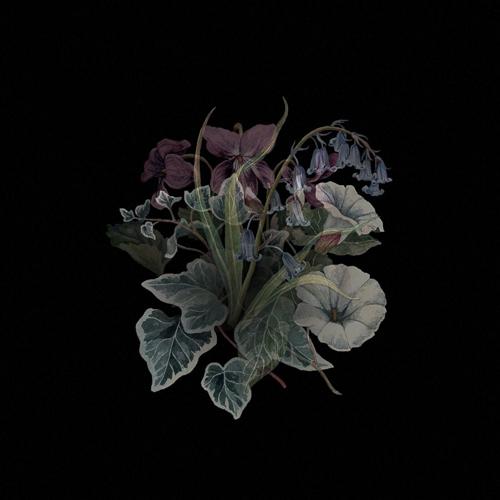 NHOR – Wildflowers